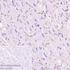 Immunohistochemistry (Formalin/PFA-fixed paraffin-embedded sections) - Anti-pan Cadherin antibody [EPR1792Y] - Intercellular Junction Marker (ab51034)