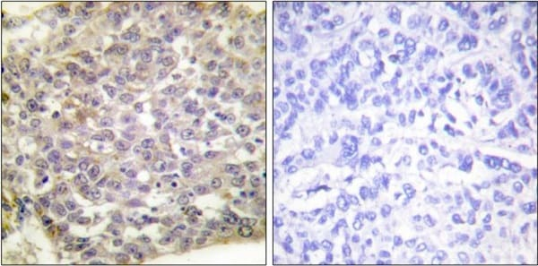 Immunohistochemistry (Formalin/PFA-fixed paraffin-embedded sections) - Anti-14-3-3 zeta antibody (ab51129)