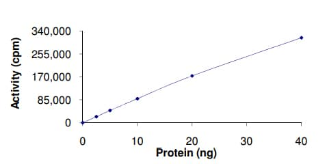 Functional Studies - Recombinant human CAMK1G protein (ab51400)