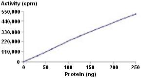 Functional Studies - Recombinant human MNK2 protein (ab51441)