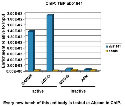 ChIP - Anti-TATA binding protein TBP antibody [mAbcam 51841] - Nuclear Loading Control and ChIP Grade (ab51841)