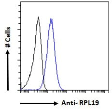 Flow Cytometry - Anti-RPL19 antibody (ab52028)