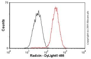 Flow Cytometry - Anti-Radixin/RDX antibody [EP1862Y] (ab52495)