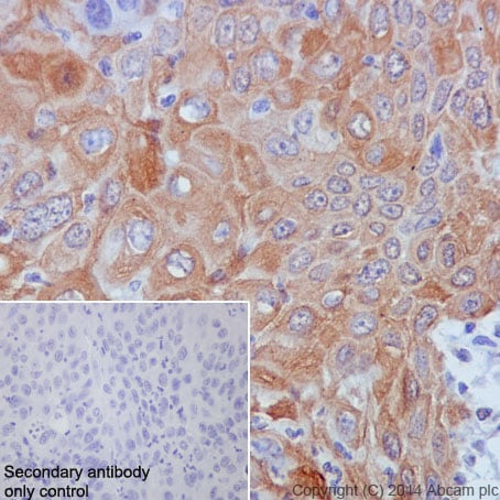 Immunohistochemistry (Formalin/PFA-fixed paraffin-embedded sections) - Anti-GM130 antibody [EP892Y] - cis-Golgi Marker (ab52649)