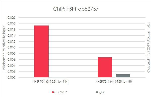 ChIP - Anti-HSF1 antibody [EP1710Y] (ab52757)