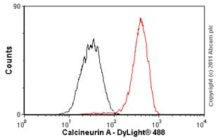 Flow Cytometry - Anti-Calcineurin A antibody [EP1669Y] (ab52761)