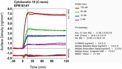 OI-RD Scanning - Anti-Cytokeratin 15 antibody [EPR1614Y] (ab52816)