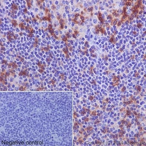 Immunohistochemistry (Formalin/PFA-fixed paraffin-embedded sections) - Anti-CD11a antibody [EP1285Y] (ab52895)