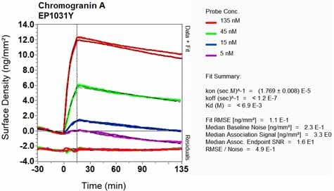 Other - Anti-Chromogranin A antibody [EP1031Y] (ab52983)