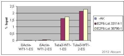 ChIP - Anti-E2F6 antibody (ab53061)
