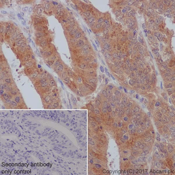 Immunohistochemistry (Formalin/PFA-fixed paraffin-embedded sections) - Anti-GOSR1/GS28 antibody [EP1768Y] (ab53288)