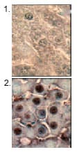 Immunohistochemistry (Formalin/PFA-fixed paraffin-embedded sections) - Anti-Hsp70 antibody [BB70] (ab53496)