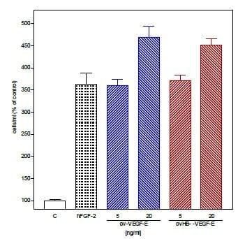 Functional Studies - Recombinant human VEGFE protein (ab53679)