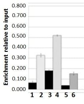 ChIP - Anti-PML Protein antibody - N-terminal (ab53773)