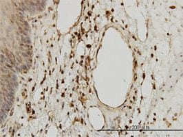 Immunohistochemistry (Formalin/PFA-fixed paraffin-embedded sections) - Anti-beta 2 Microglobulin antibody (ab54810)