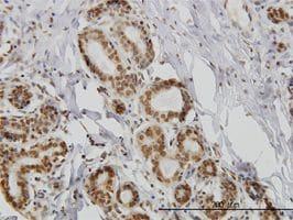 Immunohistochemistry (Formalin/PFA-fixed paraffin-embedded sections) - Anti-IL-15 antibody (ab55276)