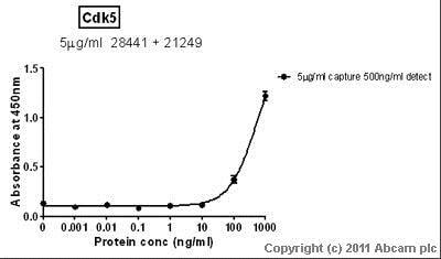 Sandwich ELISA - Recombinant Human Cdk5 protein (ab56282)