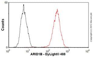 Flow Cytometry - Anti-ARID1B antibody (ab57461)
