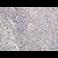 Immunohistochemistry (Formalin/PFA-fixed paraffin-embedded sections) - Anti-Cytosolic Phospholipase A2 antibody (ab58375)