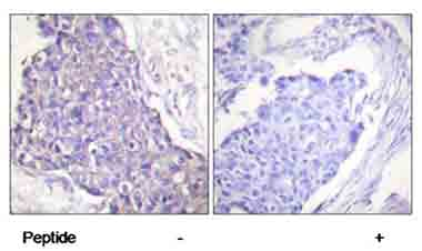 Immunohistochemistry (Formalin/PFA-fixed paraffin-embedded sections) - Anti-CD40 antibody (ab58391)