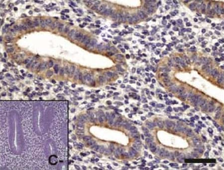 Immunohistochemistry (Formalin/PFA-fixed paraffin-embedded sections) - Anti-PKC zeta antibody (ab59364)