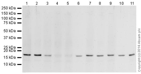 免疫印迹-抗组蛋白H3(双甲基K4,三甲基K4)抗体[mAbcam 6000]-芯片级(ab6000)
