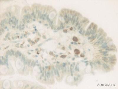 Immunohistochemistry (Formalin/PFA-fixed paraffin-embedded sections) - Anti-BMP2 antibody [65529.111] (ab6285)