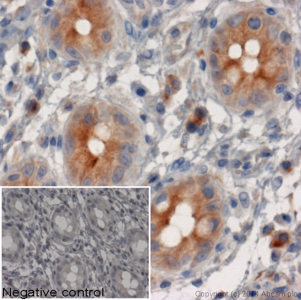 Immunohistochemistry (Formalin/PFA-fixed paraffin-embedded sections) - Rabbit Anti-Rat IgG H&L (HRP) (ab6734)