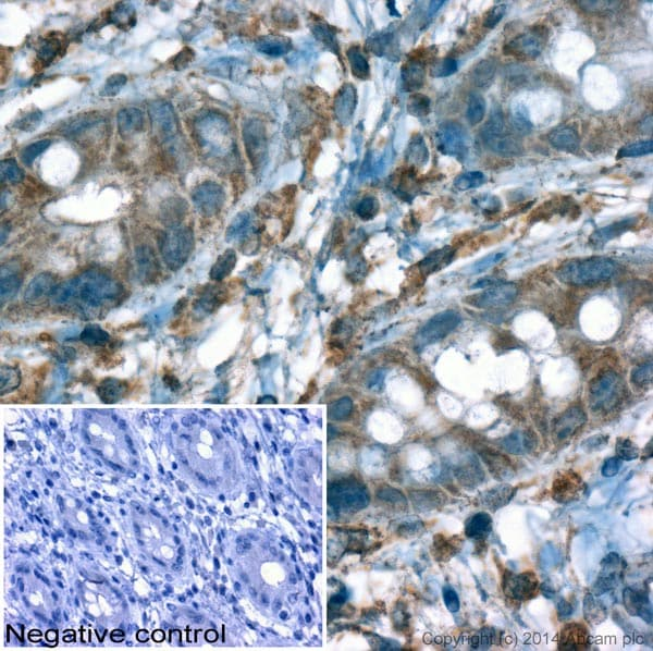 Immunohistochemistry (Formalin/PFA-fixed paraffin-embedded sections) - Donkey Anti-Goat IgG H&L (HRP) (ab6885)