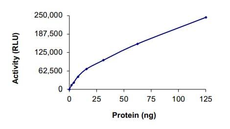 Functional Studies - Recombinant human PAK5 protein (ab60754)