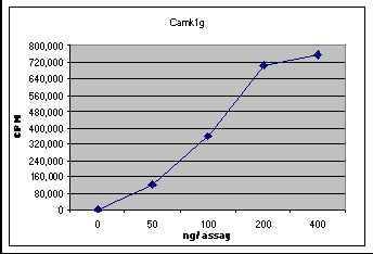 Functional Studies - Recombinant human CAMK1G protein (ab61917)