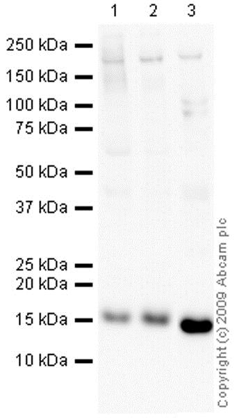 Western blot - HRP Anti-COX IV antibody [mAbcam33985] - Mitochondrial Marker (ab62164)