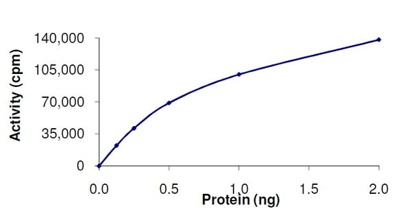 Functional Studies - Recombinant Raf1 protein (Active) (ab62292)