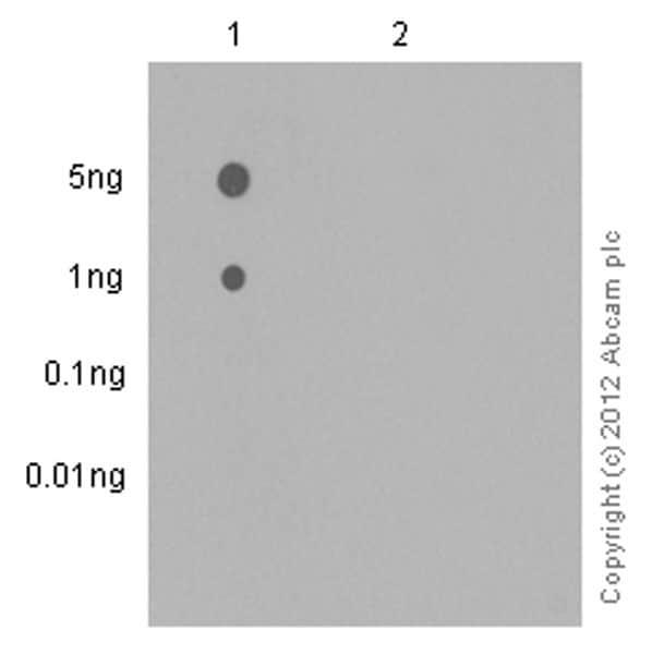 Dot Blot - Anti-Syk (phospho Y323) antibody [EP573-4] (ab62338)