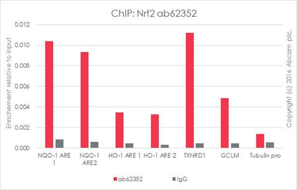 ChIP - Anti-Nrf2 antibody [EP1808Y] - ChIP Grade (ab62352)