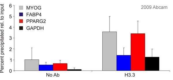 ChIP - Anti-Histone H3.3 antibody (ab62642)