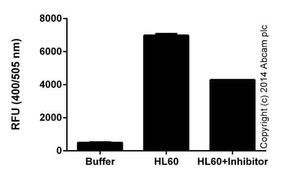 Functional assays: Cathepsin B Activity Assay Kit (Fluorometric) (ab65300)