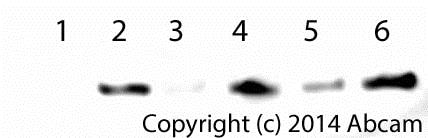 Functional assays: Cytochrome c Releasing Apoptosis Assay Kit (ab65311)