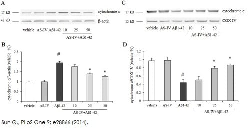Inhibition of cytochrome c release from mitochondria in SK-N-SH cells
