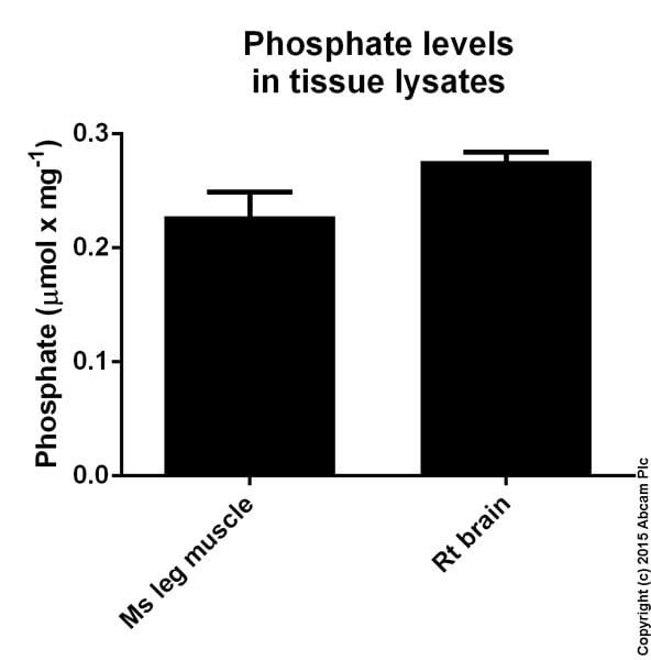 Functional Studies - Phosphate Colorimetric Assay Kit (ab65622)