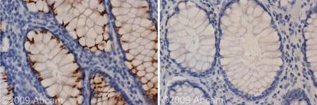 Immunohistochemistry (Formalin/PFA-fixed paraffin-embedded sections) - Anti-Kir2.1/BIK antibody (ab65796)