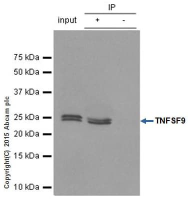 Immunoprecipitation - Anti-4-1BBL antibody [EPR1172Y] (ab68185)