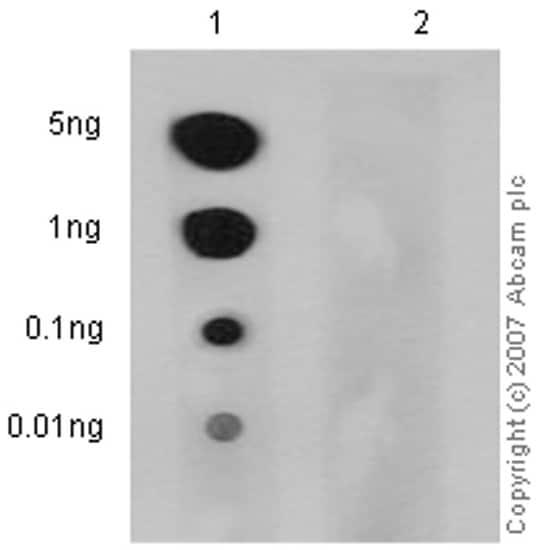 Dot Blot - Anti-CD3 zeta (phospho Y83) antibody [EP776(2)Y] (ab68236)