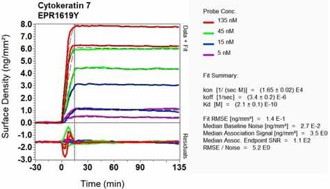 OI-RD Scanning - Anti-Cytokeratin 7 antibody [EPR1619Y] - Cytoskeleton Marker (ab68459)