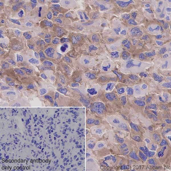 Immunohistochemistry (Formalin/PFA-fixed paraffin-embedded sections) - Anti-GSK3 (alpha + beta) (phospho Y216 + Y279) antibody [EPR933Y] (ab68476)