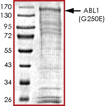 SDS-PAGE - Recombinant human ABL1 protein (ab69810)