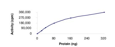 Functional Studies - Recombinant human Chk1 protein (ab69918)