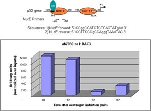 ChIP - Anti-HDAC3 antibody - ChIP Grade (ab7030)