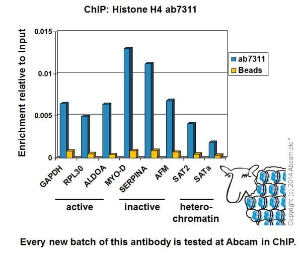 ChIP - Anti-Histone H4 antibody - ChIP Grade (ab7311)