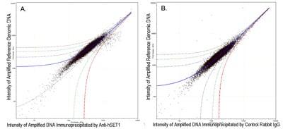 ChIP on chip - Anti-hSET1/SET1 antibody (ab70378)